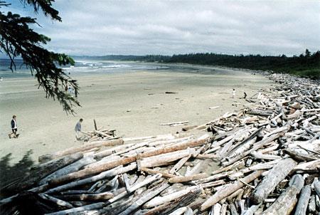 Les plus belles plages du monde for La belle au bois flotte