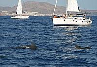 Dauphins à La Gomera © Sara Sánchez-Romo Costa / Turismo de Canarias