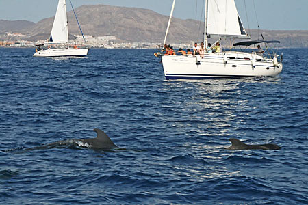 baleines aux canaries