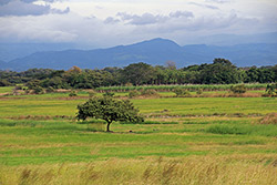 Paysage du Guanacaste. yepyep - Flickr - CC BY-NC-ND 2.0