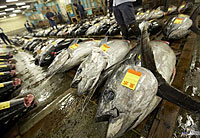 Marché de Tsukiji © JNTO