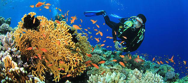 plongee-sous-marine