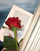 Sant Jordi en Catalogne : la fête des amoureux… du livre