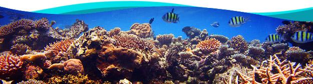 La plongée sous-marine