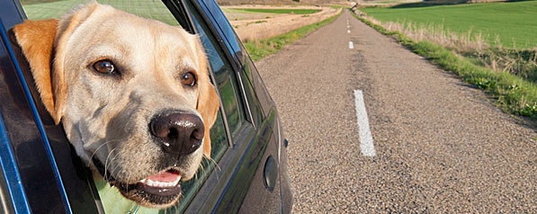 voyage maroc avec chien